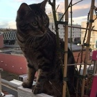Yassine, babysitting - 94140 Alfortville